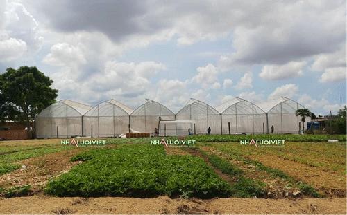 Nhà mái một mái hở trồng rau và dưa lưới