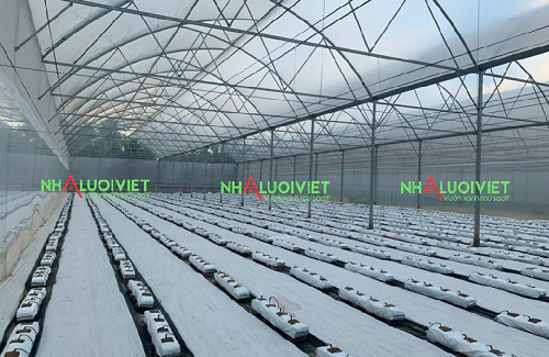 Bạt phủ sử dụng trong nhà trồng dưa lưới