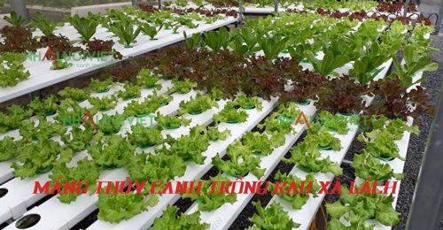 Máng thủy canh trồng rau xà lách