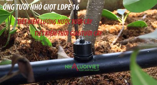 Ống tưới nhỏ giọt giúp giảm thời gian và lượng nước tưới cây