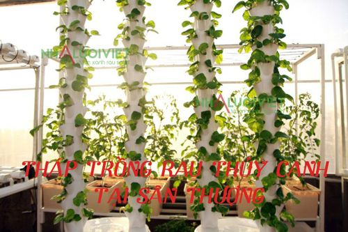 Tháp trồng rau thủy canh tại sân thượng