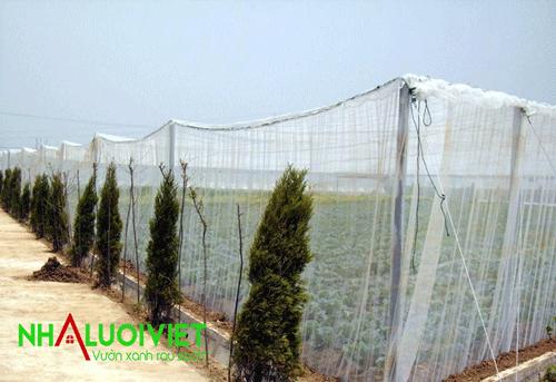Nhà lưới trồng rau kiểu mái bằng sử dụng lưới 32 mesh để trùm toàn bộ nhà