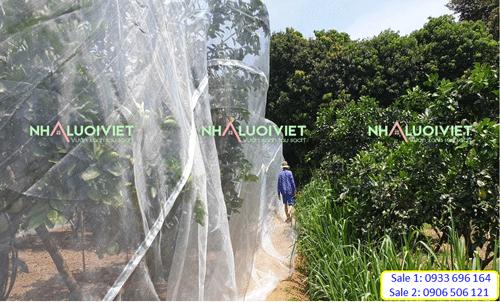 Vườn cam ở Hà Tĩnh sau khi trùm lưới ngăn côn trùng