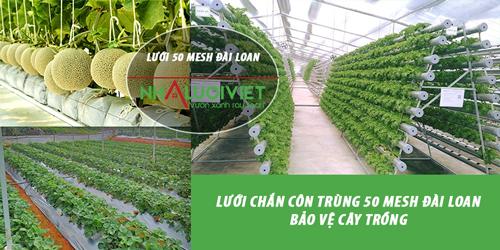 Lưới chắn côn trùng 50 mesh Đài Loan bảo vệ cây trồng