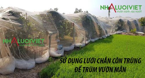 Sử dụng lưới trùm vườn mận chắn côn trùng