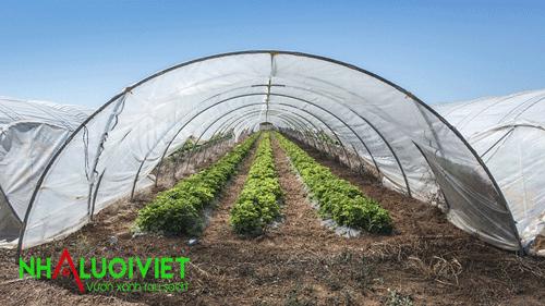 Sử dụng lưới 32 mesh làm nhà màng trồng rau sạch