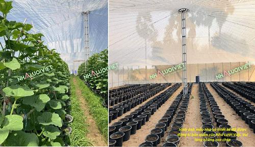 cách làm nhà trồng rau