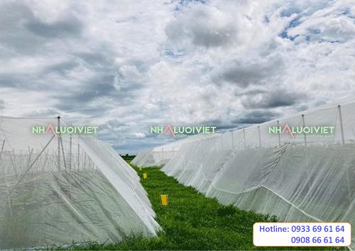 nhà lưới trồng rau giá gốc