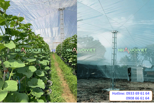 nhà lưới giá rẻ trồng rau sạch