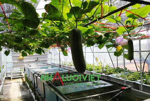Hệ thống trồng cây Aquaponics