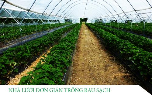 công dụng nhà lưới trồng rau