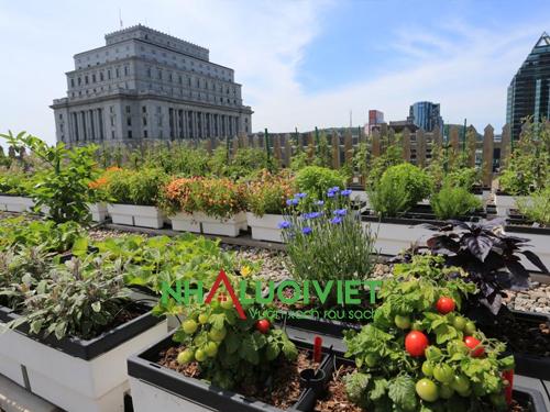 Cách tạo một vườn rau trên sân thượng