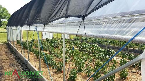 Sử dụng lưới che nắng tạo bóng mát cho cây trồng