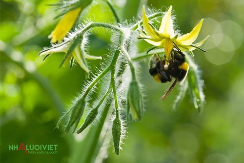 Cây trồng được hưởng lợi từ ong