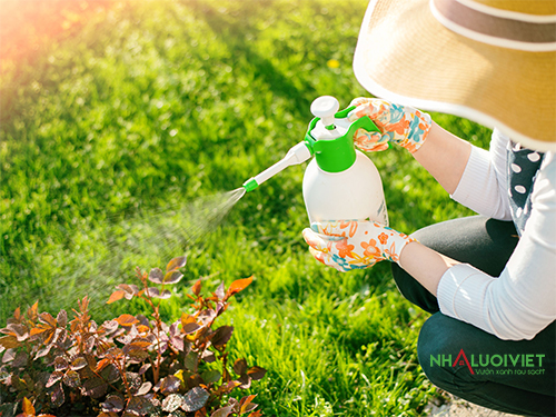 Kiểm soát sâu bọ cho vườn rau không sử dụng hóa chất
