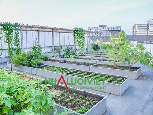 Cách tạo vườn rau trên sân thượng