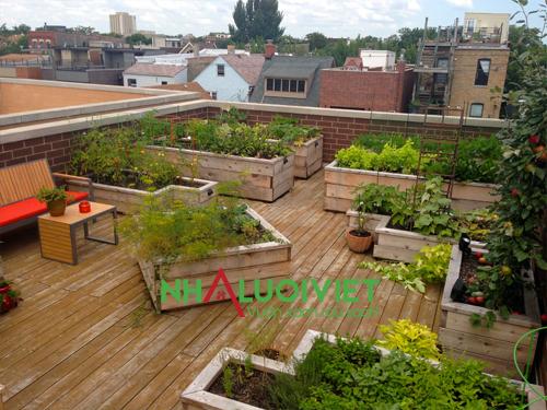 Lựa chọn cách thức trồng rau trên sân thượng