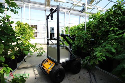 Sử dụng thiết bị để thụ phấn cho cây