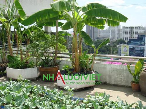 Tạo vườn rau sạch đẹp trên sân thượng