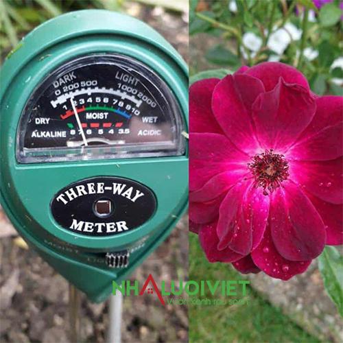 Xác định độ pH của đất cho hoa hồng