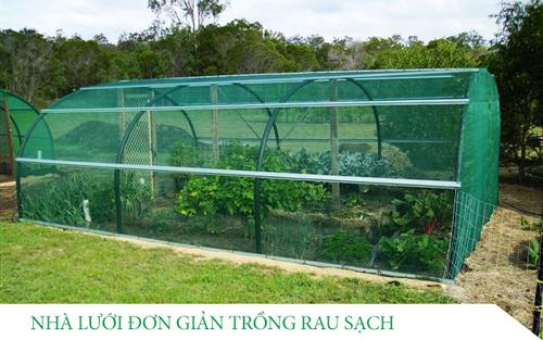 Nhà lưới đơn giản trồng rau sạch