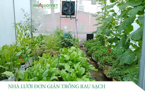 Thiết kế nhà lưới đơn giản trồng rau