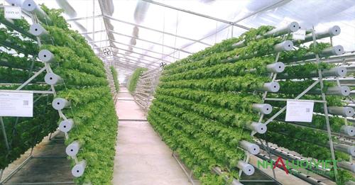 Nhà màng trồng rau thủy canh