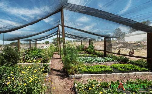 Sử dụng lưới che nắng cho nhà kính