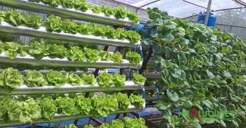 Thiết kế nhà màng trồng rau thủy canh