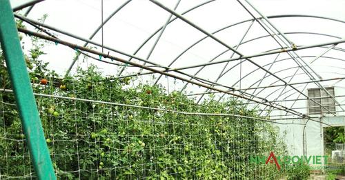 Ưu điểm trồng thủy canh trong nhà màng