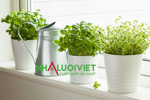9 loại thảo mộc tốt nhất nên trồng trong nhà