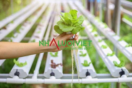 Lựa chọn cây trồng thích nghi được với pH của dung dịch thủy canh
