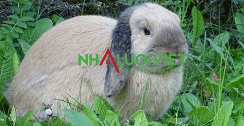 Phân thỏ có thể sử dụng trực tiếp không cần ủ