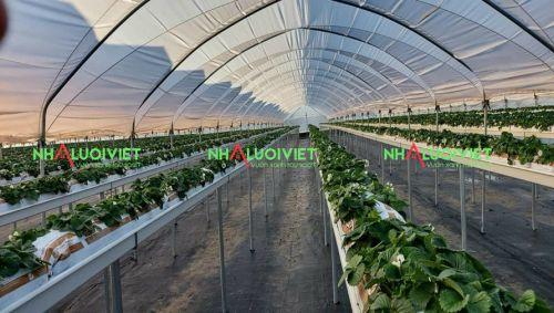 Màng PE lợp nhà kính sử dụng trong trồng trọt