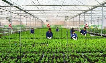 Tại sao trồng rau an trong nhà lưới an toàn hơn trồng truyền thống?