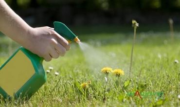 Diệt cỏ dại bằng muối - Một loại thuốc diệt cỏ không độc hại