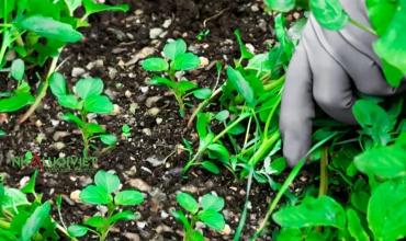 Các phương pháp hữu cơ để diệt cỏ dại một cách an toàn