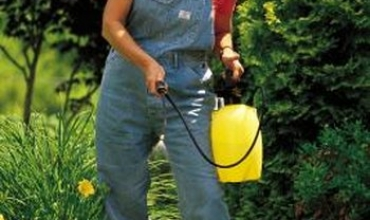 Lời khuyên về thuốc trừ sâu hữu cơ cho vườn rau