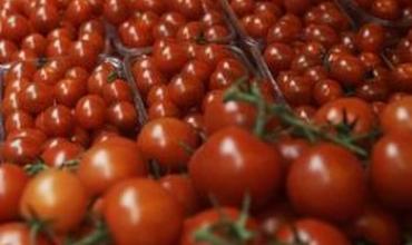 Bí quyết trồng cà chua ngọt