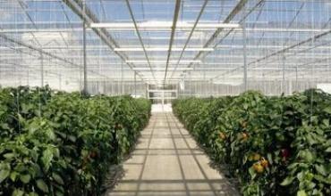Những loại rau nào phát triển tốt trong nhà kính?