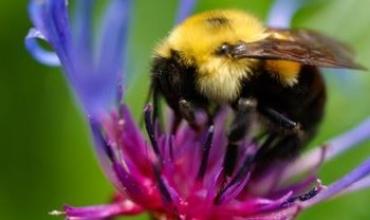 Nhà kính kết hợp với ong