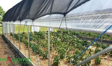 Cách sử dụng lưới che nắng để tạo bóng râm trồng trọt