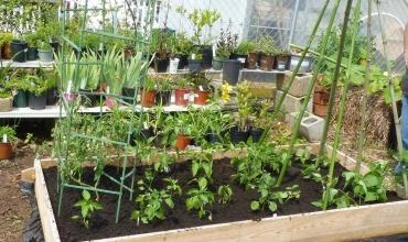 Nhà màng trồng rau thủy canh - Mô hình sản xuất hiệu quả cao