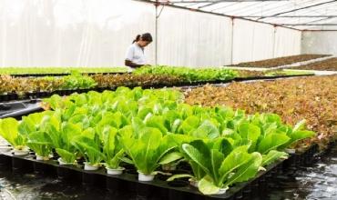 5 cách để bắt đầu làm vườn thủy canh