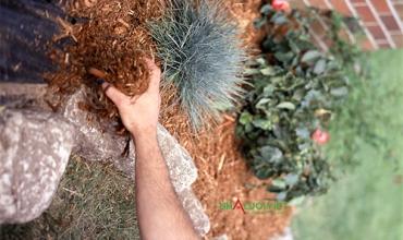 Cách làm vườn rau hữu cơ