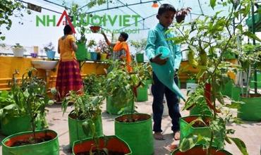 Các mẹo trồng rau trên sân thượng trên thế giới