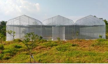 Thiết kế nhà màng trồng dưa lưới